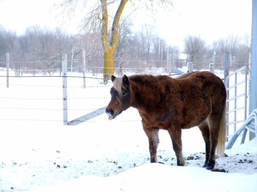 Cholatine, winter of 2012