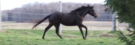 Muscade enjoying her last moments of pure foal freedom?