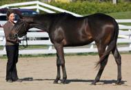 Muscade E. M. - 2010 Thoroughbred filly by Tap Day out of Barbarees Hill. $4,500
