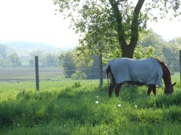 Barbarees Hill (Spring 2012, in foal to Banderas)