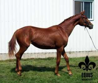Yearling pictures