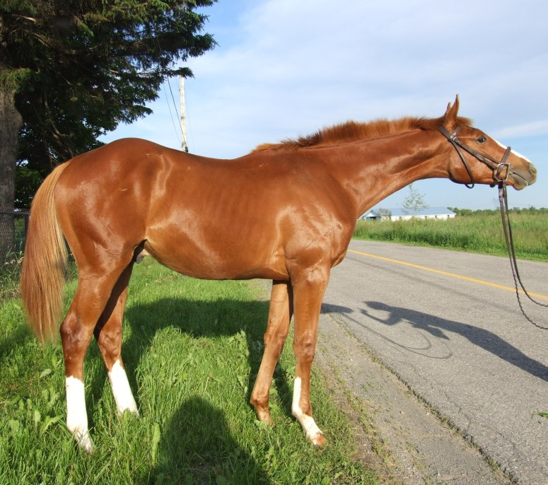 As a yearling.