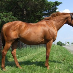 Dam, Barbarees Hill xx at 15 years of age and after 7 foals.
