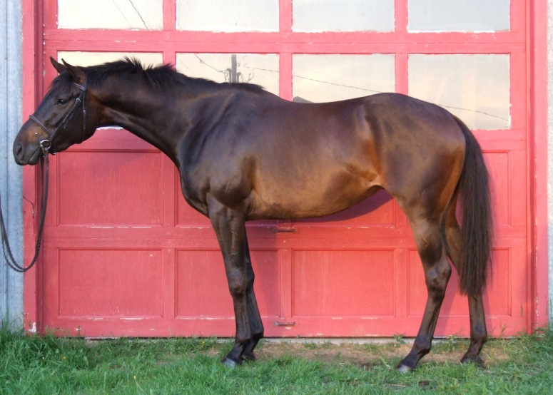 Muscade E. M. - 2010 Thoroughbred mare by Tap Day out of Barbarees Hill ($6,500 CDN in foal to Sir Wanabi)